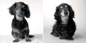 perros-ancianos-12