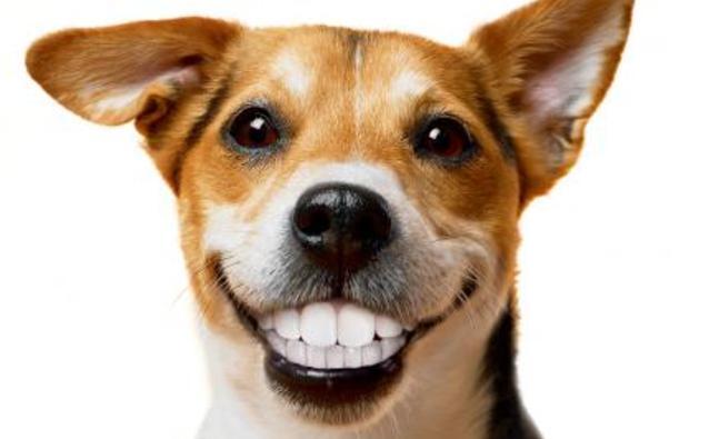 La higiene dental de nuestras mascotas